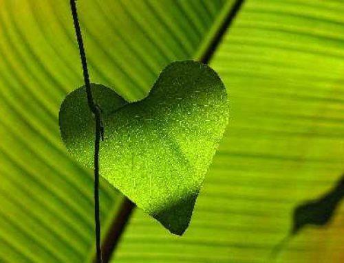 8 Simpele stappen voor een gezonder hart